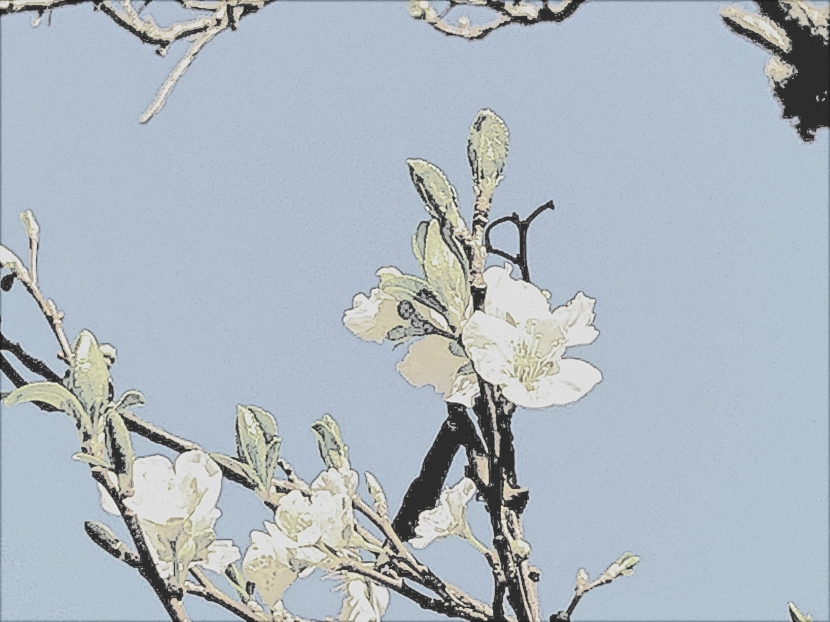 Before Plum Blossoms…